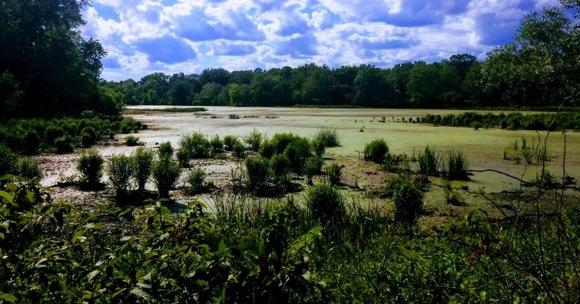 visher ferry pond