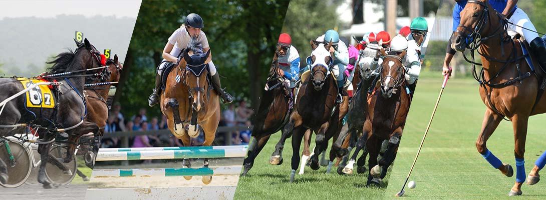 montage of horse activities