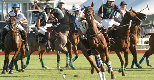 polo game in play