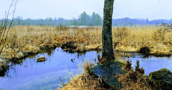 Bog Meadow Brook view