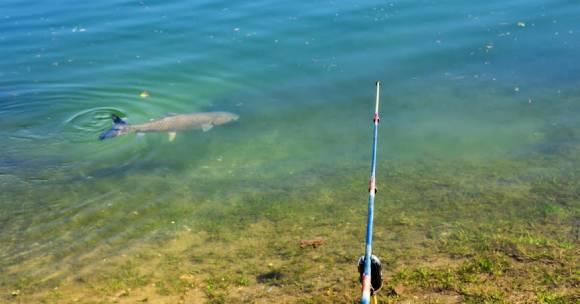 Trout in Kayaderosseras Creek