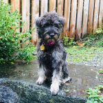 Fleur: The Rescue Dog
