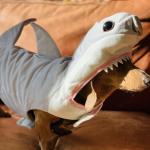 Costume - Pet