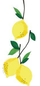Lemon Cluster White Background