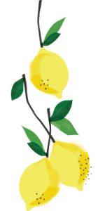 Lemon Cluster White Background Flipped