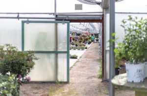 Cultivate an eternal perspective; image of a green house where plates are cultivated