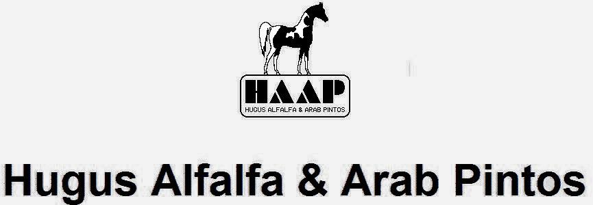 HUGUS ALFALFA & ARAB PINTOS transparent photo f4f4f4 rgb 244