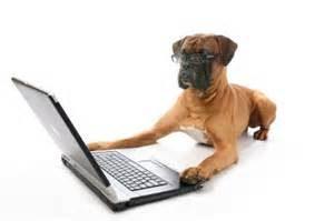comp dog