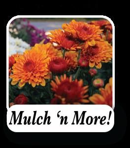 Mulch 'n More!