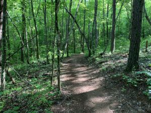 Well-maintained paths at Jackrabbit Mountain | photo by Riley Lachance