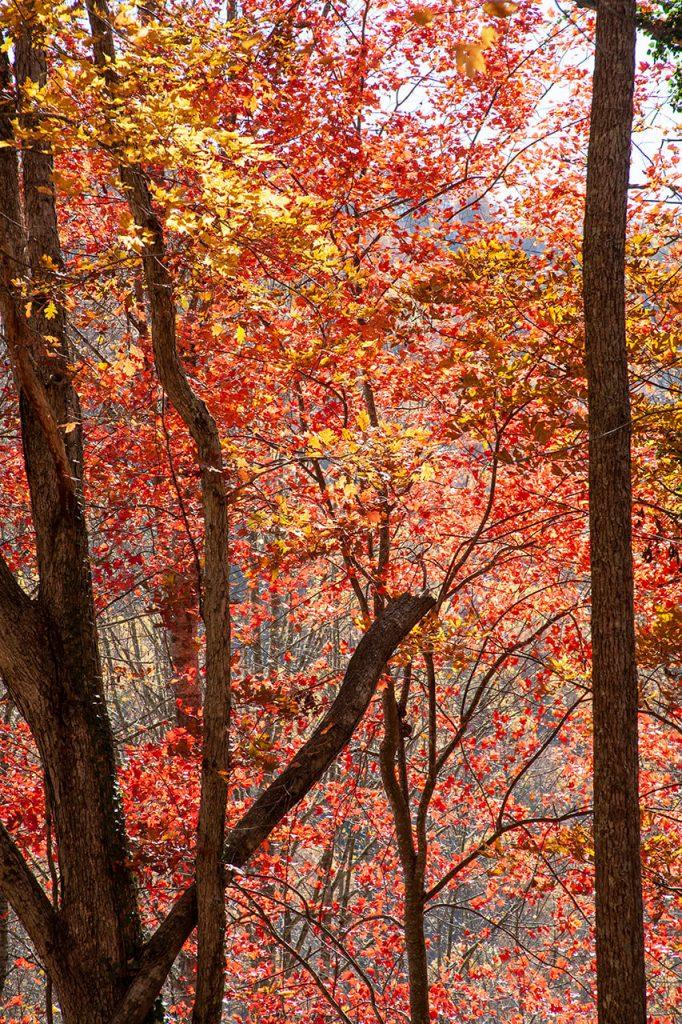 Leaf season in Western North Carolina | © Ronda Birtha
