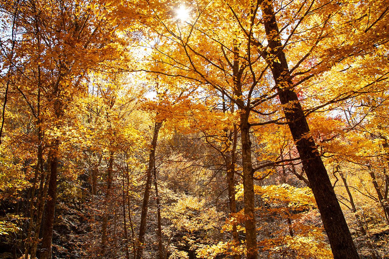 Fall leaves | © Ronda Birtha 2008