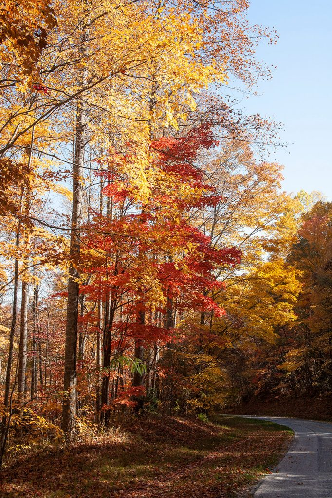 The Second Spring - Fall comes to Western North Carolina