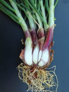 Ramps - a southern delicacy |