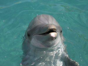 Miami Seaquarium Dolphin