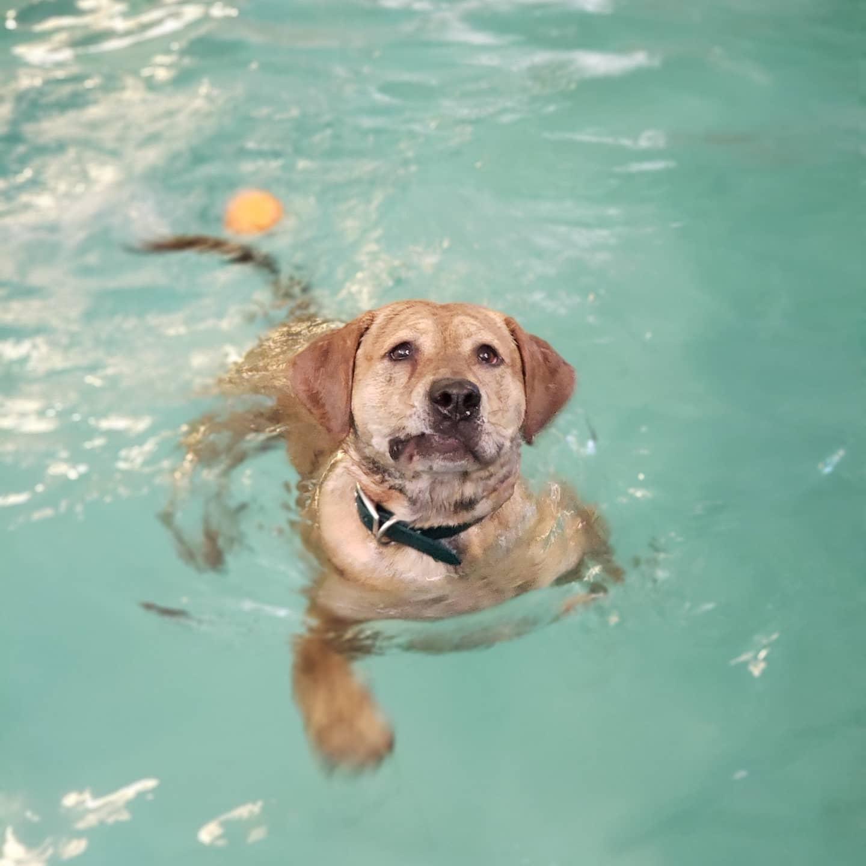 waggin pool